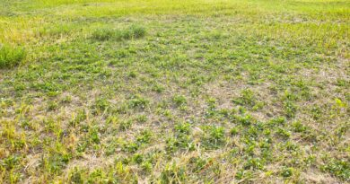Is It Wise to Invest in Vacant Land After Pandemic?